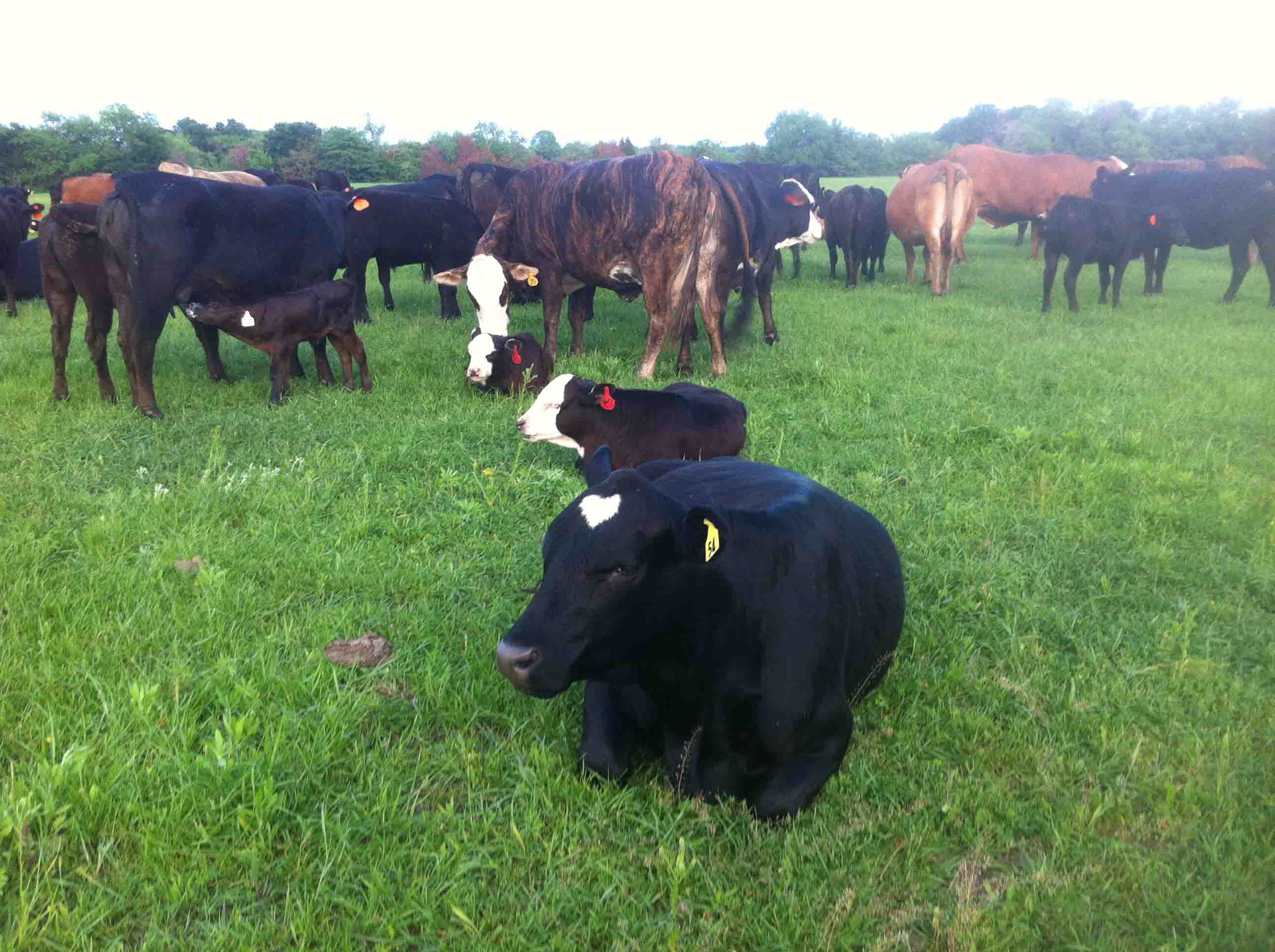 The+Kelly+family+keeps+dozens+of+cows+on+the+farm%2C+where+they+raise+and+sell+cows+for+beef.