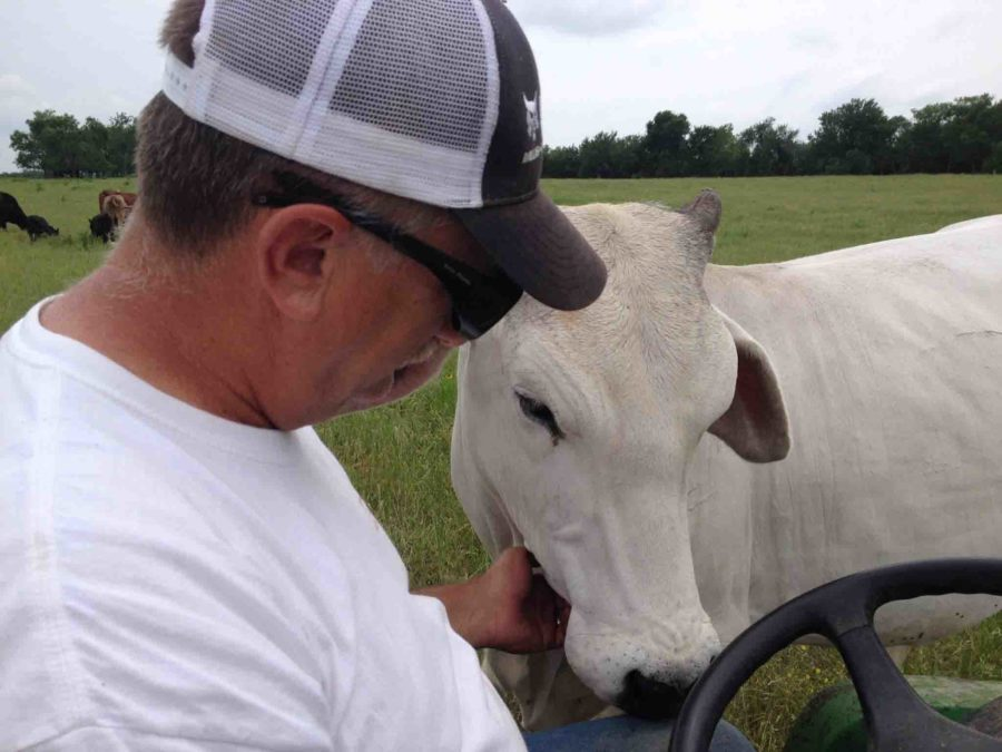 Chris+Kelley+pets+one+of+his+cows+as+he+drives+a+utility+vehicle%2C+feeding+the+cows.