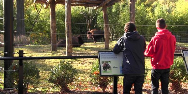 The Smithsonian Institute provides free public learning at its National zoo featuring pandas, cheetahs, bison, and hundreds of other animals.