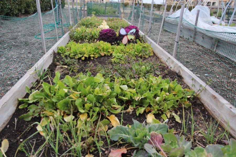 Village Gardens take root – The Red Ledger