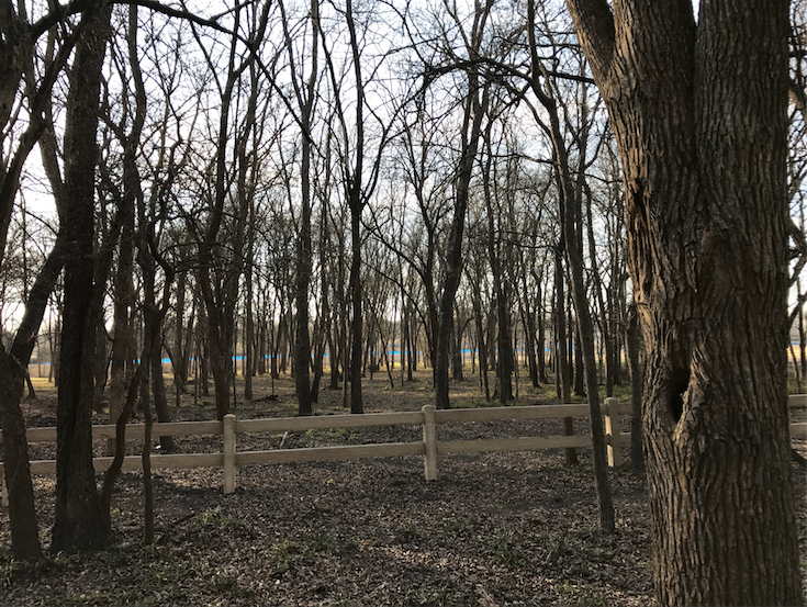 Student council's Green Week initiative occurs this week, with aims to spread awareness about protecting environments such as forests, like the one featured above in Fairview.