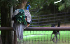 A backyard zoo