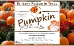 BRIT pumpkin patch to raise money for dog rescue