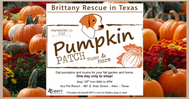 Brittany Rescue in Texas is hosting a pumpkin patch with the purpose to