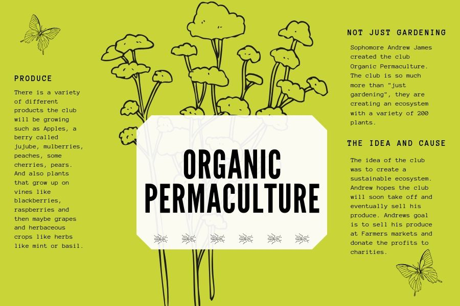 The Organic Permaculture club hopes to sell their produce at the Lucas Farmers Market in the future.