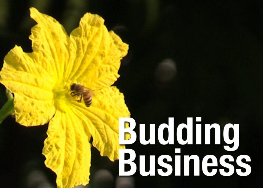Leopard Spotlight #2 2020-2021: Budding Business
