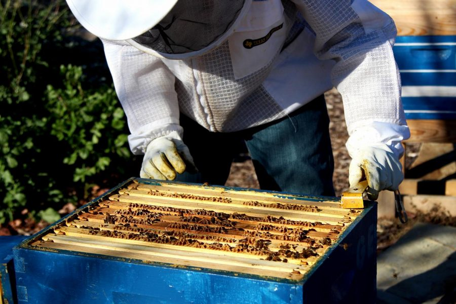 Sophomore Gabriel Ezell tends to his beehive. Ezell has been beekeeping with his mom and the two each have a hive.
