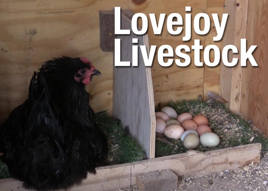 VIDEO: Lovejoy Livestock